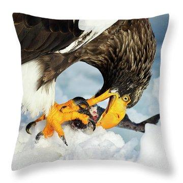 Accipitridae Throw Pillows