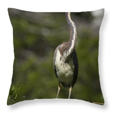 Stepping Carefully Throw Pillow by Phill Doherty