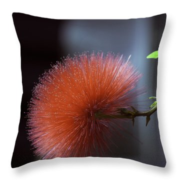 Sticky Wicket  Throw Pillow by Don Wright