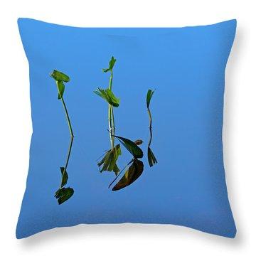 Still Throw Pillow by Karol Livote