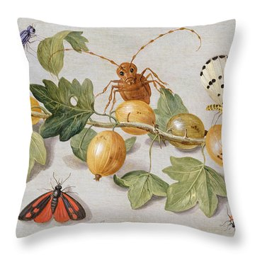 Still Life Of Branch Of Gooseberries Throw Pillow by Jan Van Kessel