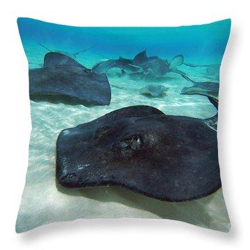 Stingrays Throw Pillow