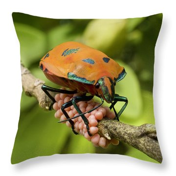 Throw Pillow featuring the photograph Stink Bug Eggs 00001 by Kevin Chippindall