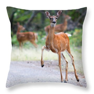 Stomp Throw Pillow by Aaron Aldrich
