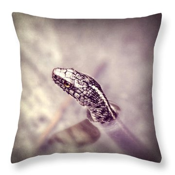 Throw Pillow featuring the photograph Stony Stare by Melanie Lankford Photography