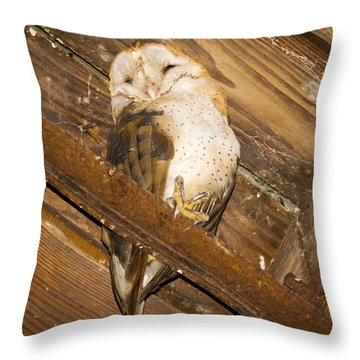 Stop Bothering Me Throw Pillow by Jean Noren