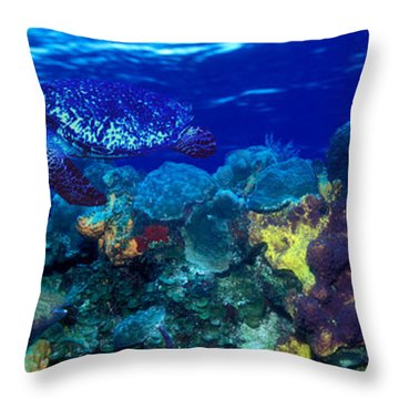 Stoplight Parrotfish Sparisoma Viride Throw Pillow
