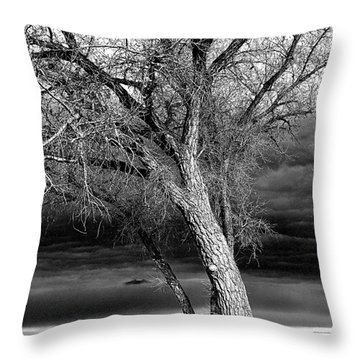 Storm Tree Throw Pillow by Steven Reed