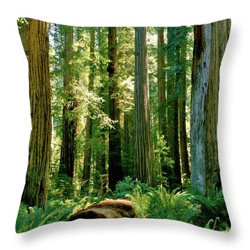 Stout Grove Coastal Redwoods Throw Pillow by Ed  Riche