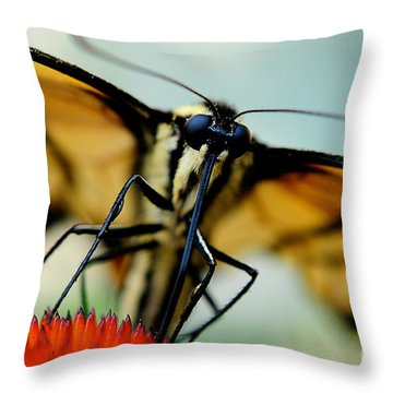 Straight On For You Throw Pillow by Lois Bryan