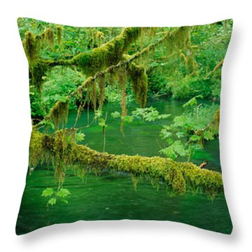 Stream Flowing Through A Rainforest Throw Pillow