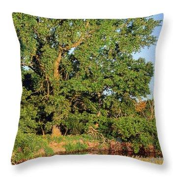 Streamside Cottonwood Throw Pillow