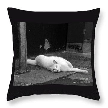 Street Cat Throw Pillow