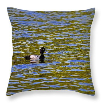Striking Scaup Throw Pillow by Al Powell Photography USA