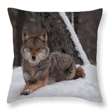 Striking The Pose Throw Pillow