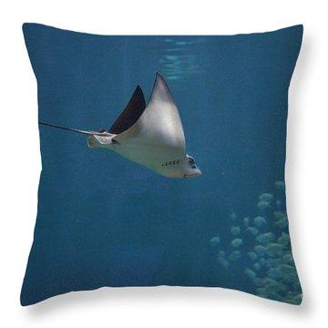 Stringray Heading Towards Fish Throw Pillow by DejaVu Designs