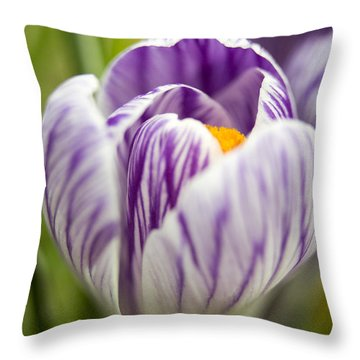 Striped Throw Pillow by Caitlyn  Grasso