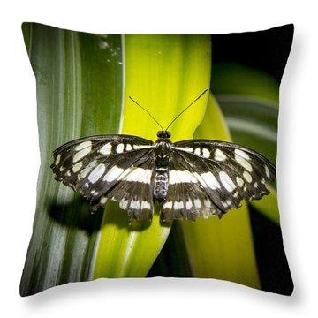Stripes On Stipes Throw Pillow by Jean Noren
