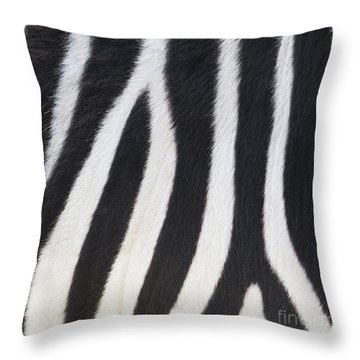 Throw Pillow featuring the photograph Stripes On Zebra by Bryan Mullennix