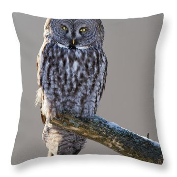Strix Nebulosa Throw Pillow by Mircea Costina Photography