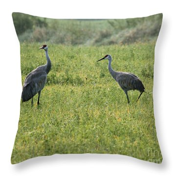 Throw Pillow featuring the photograph Strolling Cranes by Debbie Hart