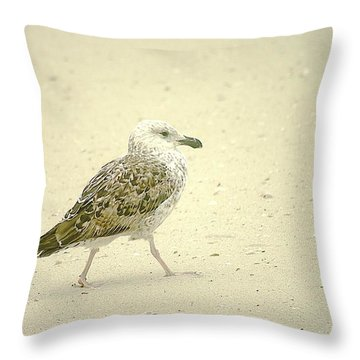 Throw Pillow featuring the photograph Strutting Young Seagull  by Suzanne Powers