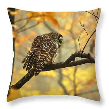Stubborn Owl Throw Pillow