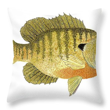 Throw Pillow featuring the painting Study Of A Bluegill Sunfish by Thom Glace
