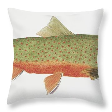 Throw Pillow featuring the painting Study Of A Male Dolly Varden Char by Thom Glace