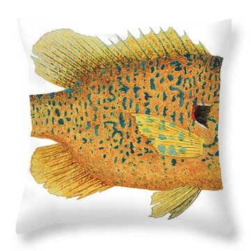 Throw Pillow featuring the painting Study Of A Male Pumpkinseed Sunfish In Spawning Brilliance by Thom Glace