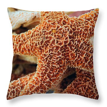 Study Of A Starfish Throw Pillow