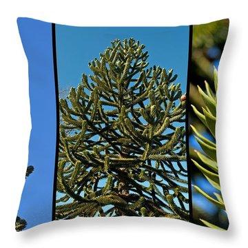 Study Of The Monkey Puzzle Tree Throw Pillow