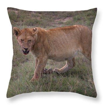 Stuffed And Sleepy Throw Pillow by Joseph G Holland