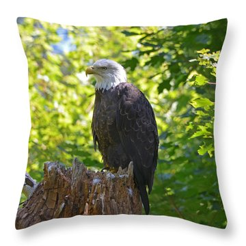 Throw Pillow featuring the photograph Stumped by David Porteus