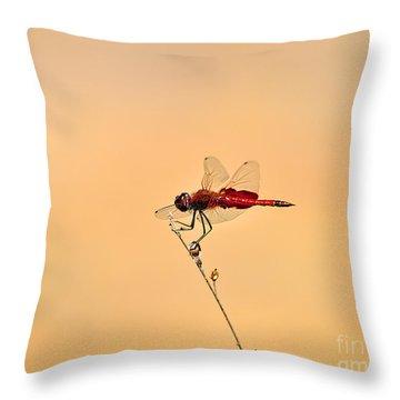 Stunning Saddlebags Throw Pillow by Al Powell Photography USA