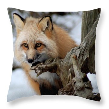 Stunning Sierra Throw Pillow by Richard Bryce and Family