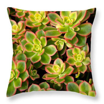 Succulent Glow Throw Pillow