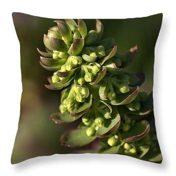 Succulent Throw Pillow by Joy Watson