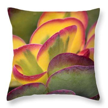 Succulent Light Throw Pillow by Garry Gay