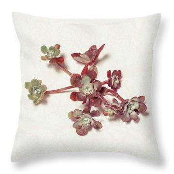 Succulent Plant 1 Throw Pillow