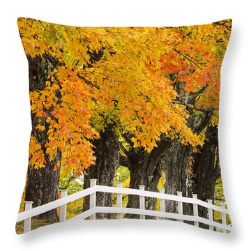 Sugar Maple Color Throw Pillow
