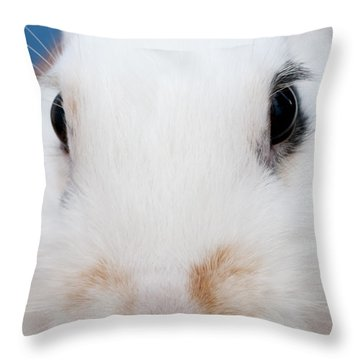 sugar the easter bunny 1 -A curious and cute white rabbit close up Throw Pillow