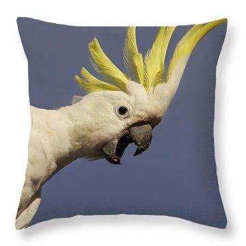 Sulphur-crested Cockatoo Displaying Throw Pillow