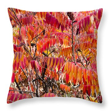 Sumac Throw Pillow by Steven Ralser