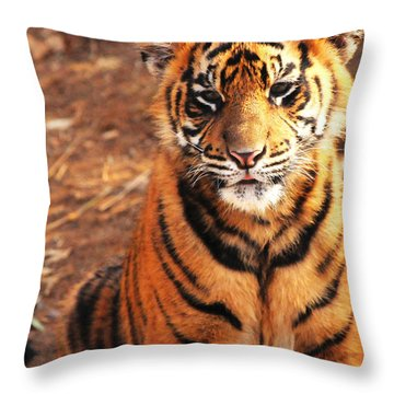 Throw Pillow featuring the photograph Sumatran Tiger Cub by Olivia Hardwicke