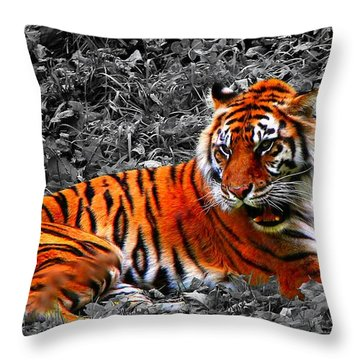 Sumatran Tiger Throw Pillow by Davandra Cribbie