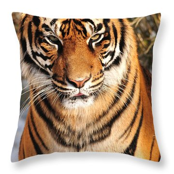 Throw Pillow featuring the photograph Sumatran Tiger by Olivia Hardwicke