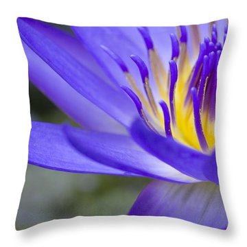 Summer Abundance Throw Pillow by Priya Ghose