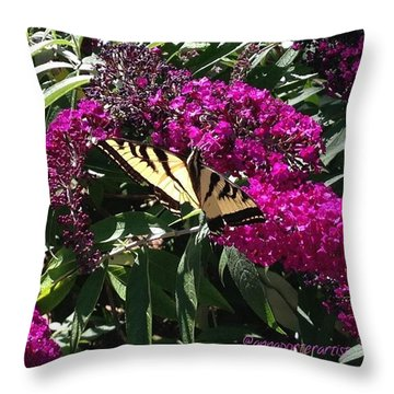 Summer Delights - A Butterfly On The Throw Pillow