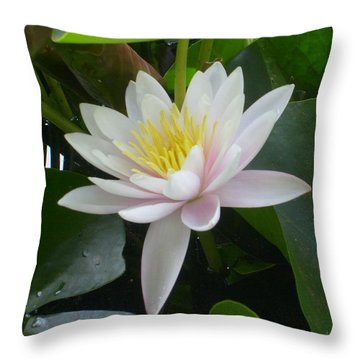 Summer Fun Throw Pillow by Ann Willmore